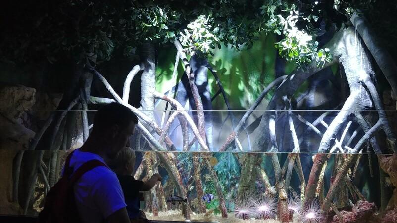 Ocenaografik Aquarium